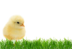 Easter cute chick Stock Photos
