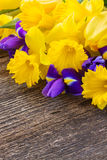 Easter daffodils and irise Stock Photos