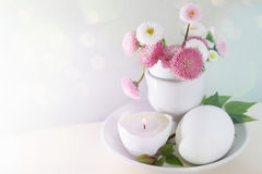 Easter daisies in eggcup card with space for text Royalty Free Stock Photos