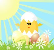 Easter day has come. Yellow chicken with easter eggs Stock Image