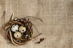 Easter day. A small nest with quail eggs on a sackcloth background, texture of burlap. With free space for text input, logo, etc royalty free stock photography