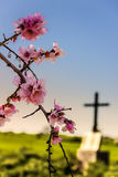 EASTER.Death and rebirth: the tomb and almond flowers(Apulia)-ITALY- Stock Image
