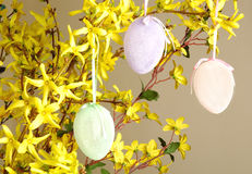 Easter decoradion. Easter eggs hanging on forsythia Stock Photos
