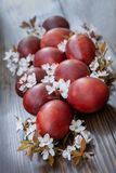 Easter decoration – colored eggs and spring cherry flowers. Close up, selective focus on dark wooden background.  royalty free stock images