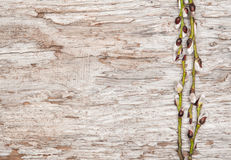Easter decoration with catkins on old wood Stock Image