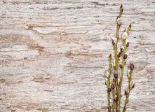 Easter decoration with catkins on old wood Royalty Free Stock Images
