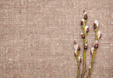 Easter decoration with catkins on sacking Royalty Free Stock Photography