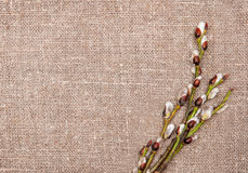 Easter decoration with catkins on sacking Royalty Free Stock Images