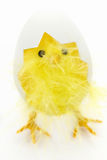 Easter decoration - chicken stock photos