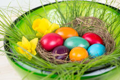 Easter decoration with colored Easter eggs, daffodils and green grass Royalty Free Stock Photos