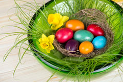 Easter decoration with colored Easter eggs, daffodils and green grass Royalty Free Stock Image
