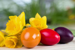Easter decoration with colorful Easter eggs with daffodils Royalty Free Stock Photography