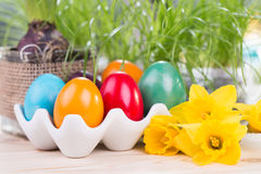 Easter decoration with colorful Easter eggs with daffodils and green grass Stock Photos