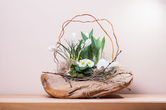 Easter decoration with crocus. Easter decoration idea with crocus flowers Stock Photos
