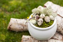Free Easter Decoration Easter Eggs In The Nest And Feathers In The White Vase On Birch Logs On Green Grass Outdoor Stock Photos - 172498043
