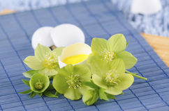 Easter decoration with egg shell and hellebore flower on a blue pad. And yellow tempera paint Royalty Free Stock Image