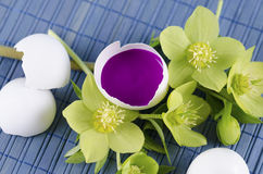 Easter decoration with egg shell with magenta tempera paint in and hellebore. On a blue pad Stock Photos