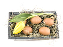 Easter decoration - eggs in flowerpot Stock Photo