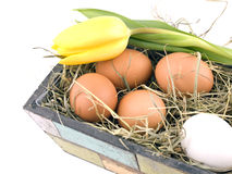 Easter decoration - eggs in flowerpot Stock Images