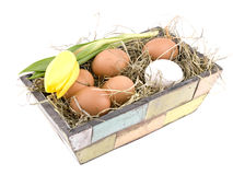 Easter decoration - eggs in flowerpot Royalty Free Stock Images
