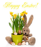 Easter decoration, eggs, narcissus flowers, bunny Stock Photography