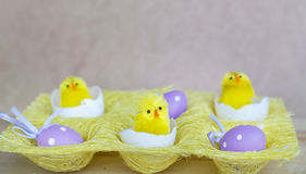 Easter decoration with eggs and yellow easter  chikens Royalty Free Stock Images