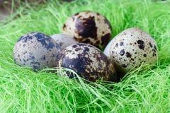 Easter decoraton with festive nest quail eggs. Easter decoration with festive nest quail eggs Stock Image