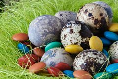 Easter decoraton with festive nest quail eggs. Easter decoration with festive nest quail eggs Royalty Free Stock Image