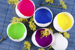 Easter decoration with five egg shells with paint and yellow spring flowers. On a blue pad stock photos