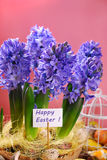 Easter decoration with fresh hyacinth flowers on pink background Stock Photography