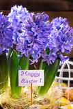 Easter decoration with fresh hyacinth flowers on wooden backgrou Stock Photo