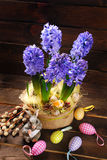Easter decoration with fresh hyacinth flowers on wooden backgrou Royalty Free Stock Images
