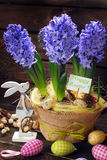 Easter decoration with fresh hyacinth flowers on wooden backgrou Royalty Free Stock Photography