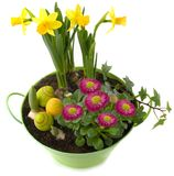 Easter decoration - pot with spring flowers and colorful eggs Royalty Free Stock Photography