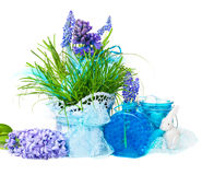 Easter decoration with hyacinths Royalty Free Stock Photography