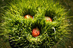 Easter decoration. Made from eggs in grass pot Royalty Free Stock Images
