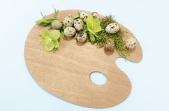 Easter decoration with palette with quail eggs and hellebore. On a blue background Royalty Free Stock Images
