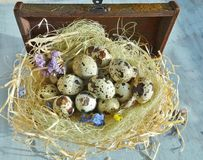 Easter decoration, quail eggs Royalty Free Stock Images