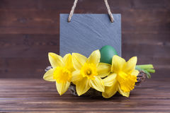 Easter decoration with slate plate. Slate plate with easter daffodil decoration and copy space Stock Images