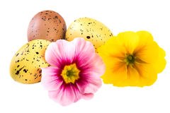 Easter Decoration Spring Flowers Stock Image