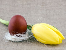 Easter decoration - tulip and egg Royalty Free Stock Images