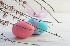 Easter decoration, two eggs in pastell pink and blue in a woode. N box with moss and genista flowers on white painted wood, copy space, selected focus, narrow stock photos