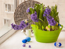 Easter decoration window hyacinths and daffodils Stock Images
