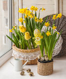 Easter decoration on the window and yellow daffodils Royalty Free Stock Images
