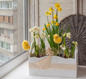 Easter decoration windowsill pots with daffodils Stock Photography