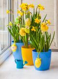 Easter decoration windowsill pots with daffodils Stock Photo