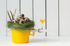 Easter Decoration - Yellow Cup with Quail Eggs in a Nest on Top and a Clothespin with an Orange Crocus Flower Stock Image