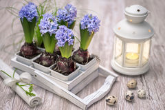 Easter decorations with blue hyacinth flowers Royalty Free Stock Photography
