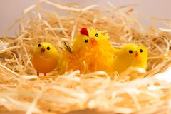 Easter decorations - chickens and hen in brood royalty free stock photography