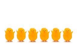 Easter decorations chickens on white background Royalty Free Stock Photo